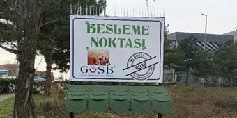 GOSB İÇİNDE BARINAN SOKAK HAYVANLARI İLE İLGİLİ ÇALIŞMALAR