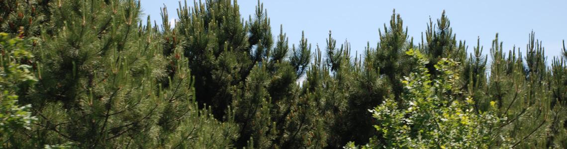 GOSB Ormanı